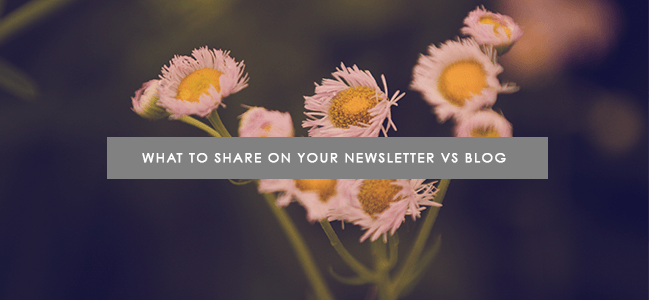 what do I share on my blog and newsletter?